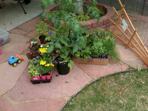 Flowers, veggies and herbs for the garden.